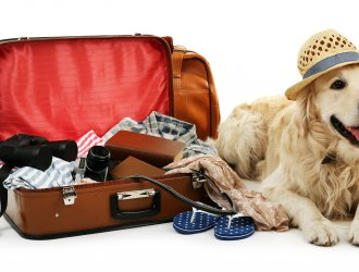 Holidaymakers Choosing To Leave Pets At Home