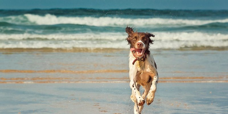 Best places in the UK to go on holiday with your dog