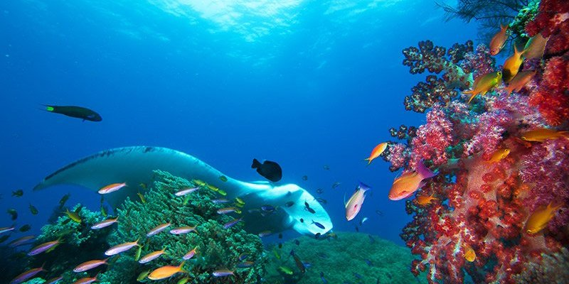 Top 7 sea animals to see in the wild and where to find them