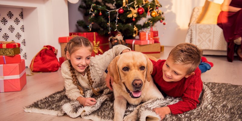 Dog-Friendly Christmas Cottages