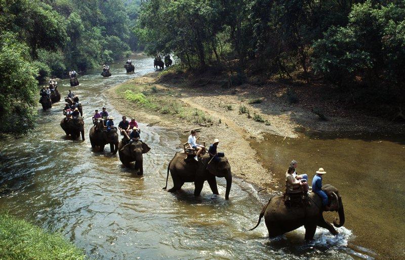Elephant Trails Thailand