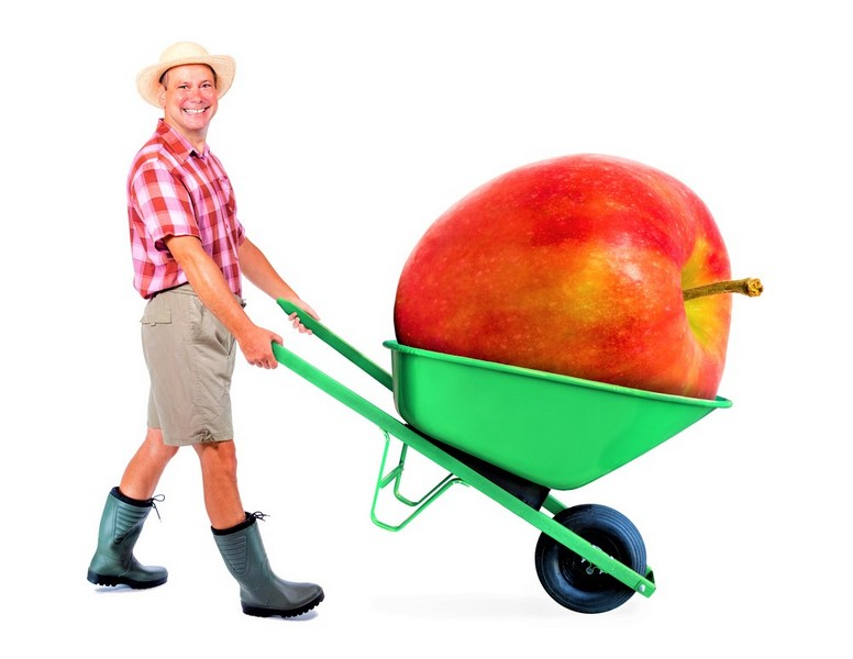 man with big apple in wheelbarrow