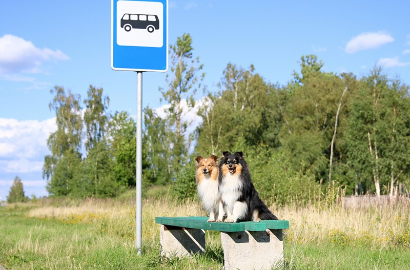 two dogs waiting for a bus