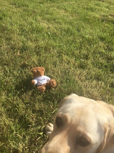 small bear and dog