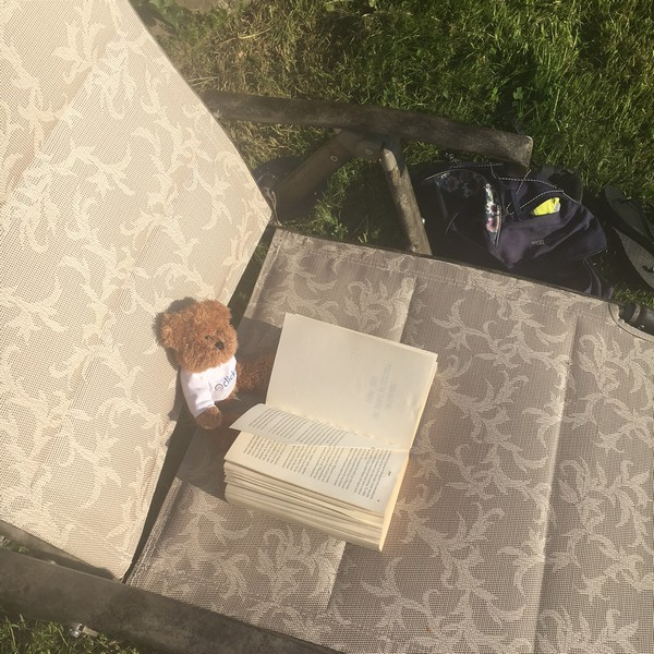 Bear with book on sun lounger