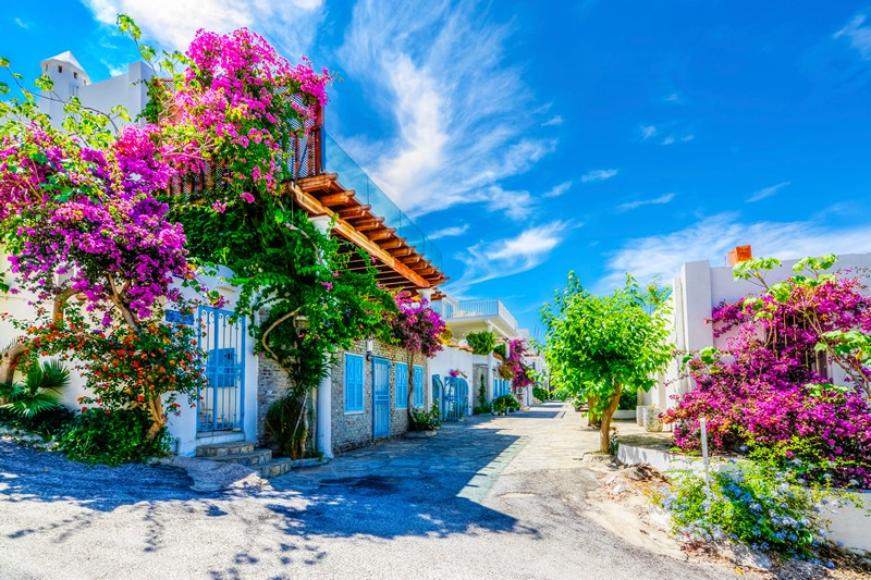 Bodrum streets and flowers