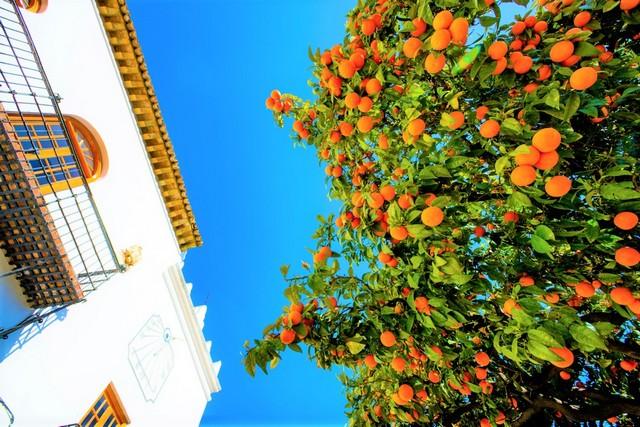 Hire car day trip location 1 Marbella orange trees