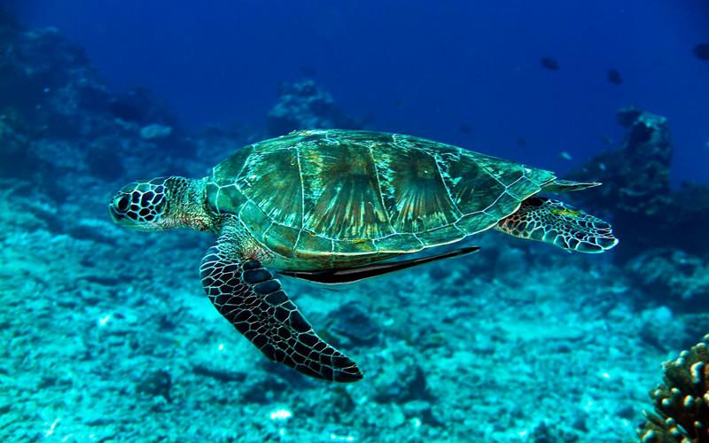 Turtles Thailand