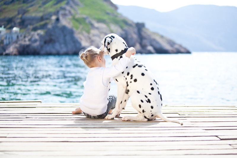 Dalmatians in Croatia