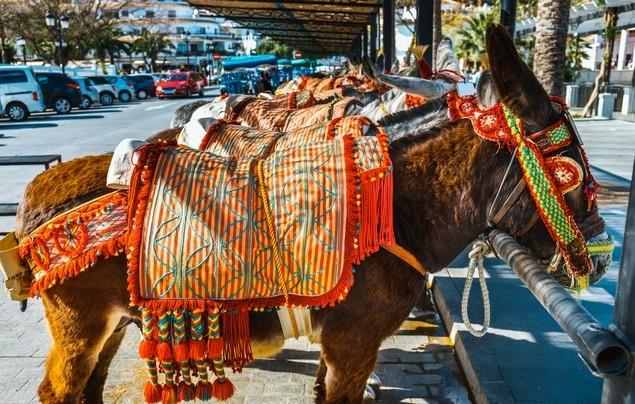 Burro taxi in Mijas