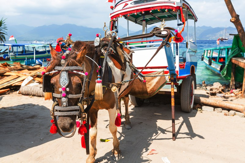 horse and cart Gili Islands Indonesia