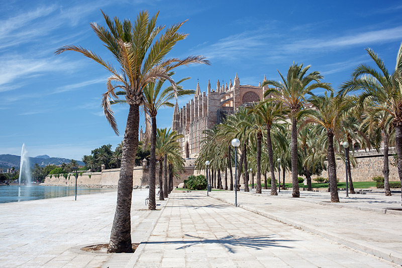 Photo of the Cathedral of Santa Maria of Palma de Mallorca palm Trees