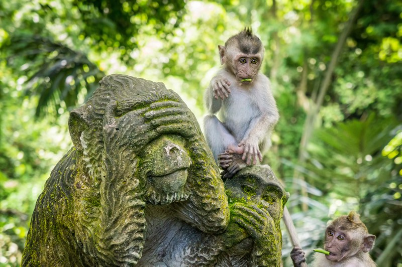 Sacred Monkey Forest Temple