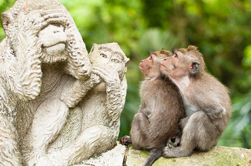 The monkey sanctuary Bali