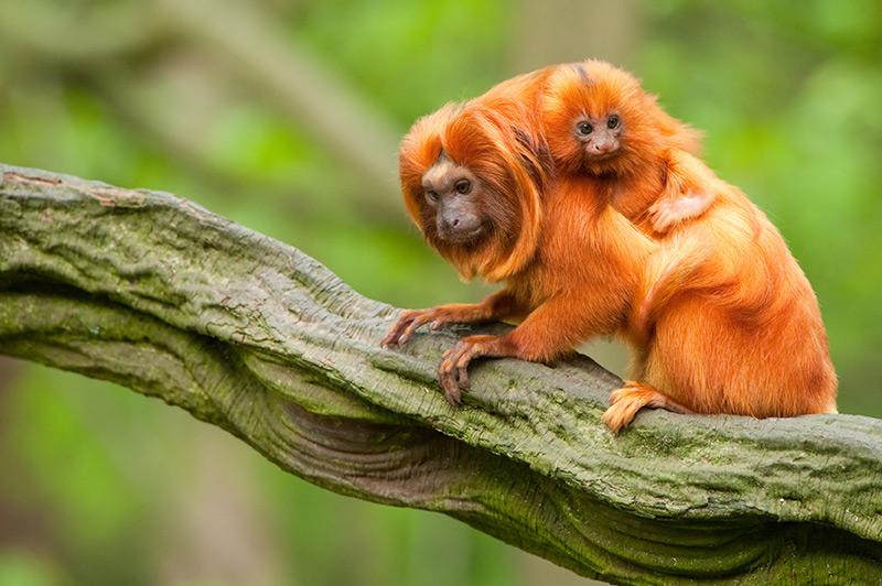 Wildlife in Mauritius