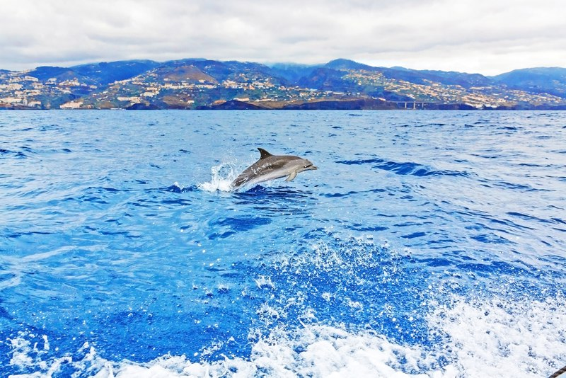 albufeira algarve dolphin watching