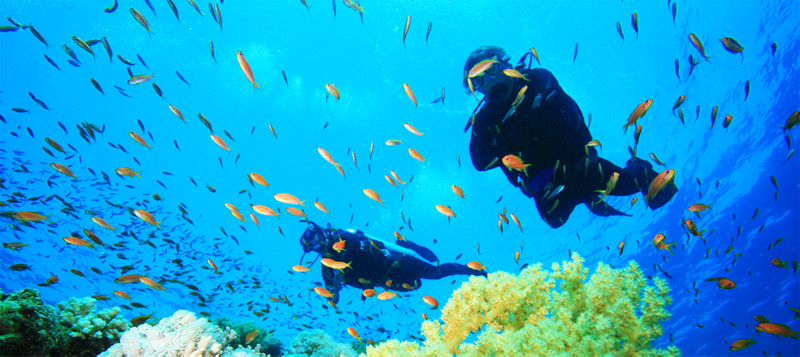 Diving in the marine world of Cape Verde
