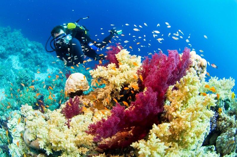 Diving in Tenerife in Spain.
