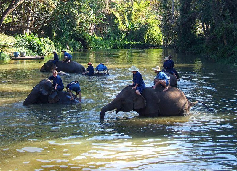 Lampang Elephants