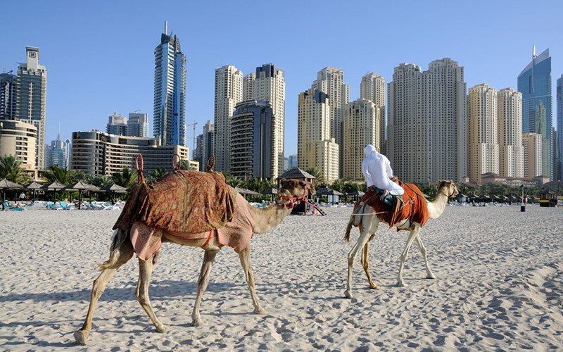 Apartments in Dubai with camels in foreground