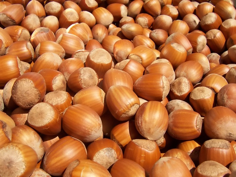 Turkey Hazelnuts