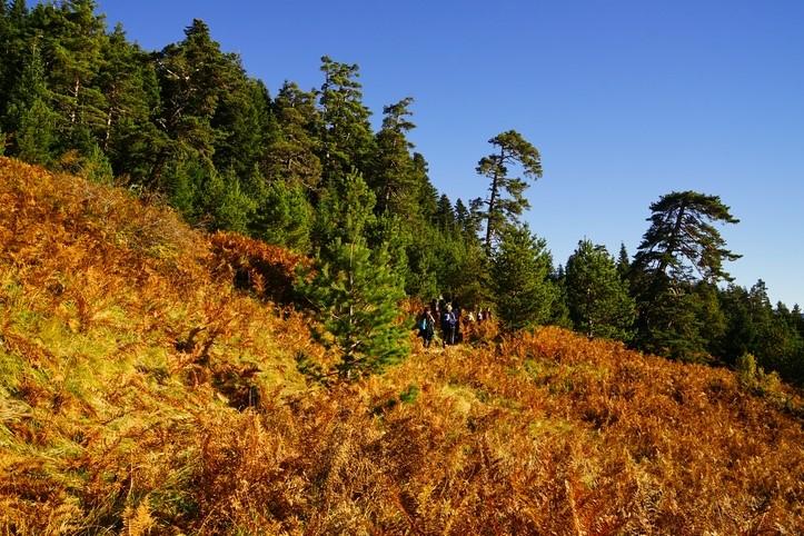 Yenice Forest Trail in Turkey