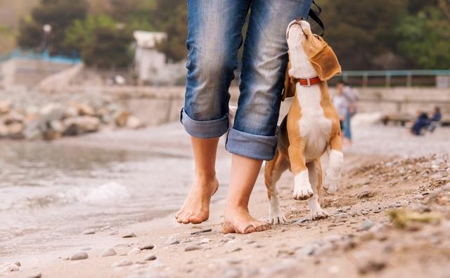 Dog walk on a beach