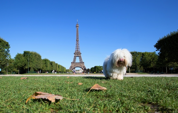 Dog in front of Eiffel Tower