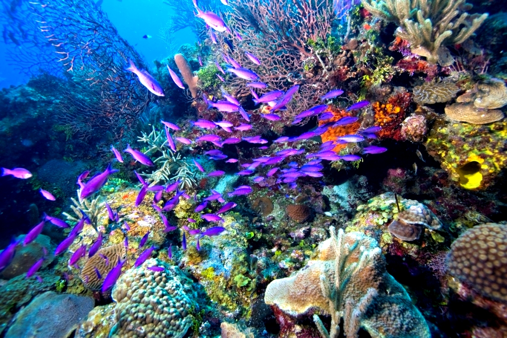 School of creole wrasse, Thailand