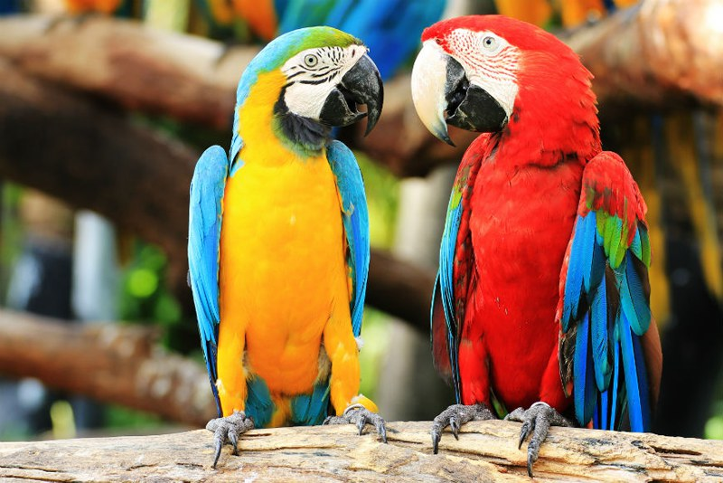 Parrots at the zoo in Tenerife