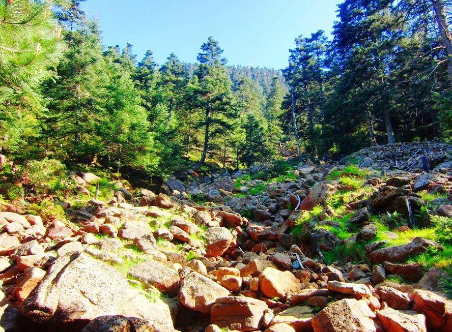 Sierra Bermeja natural park