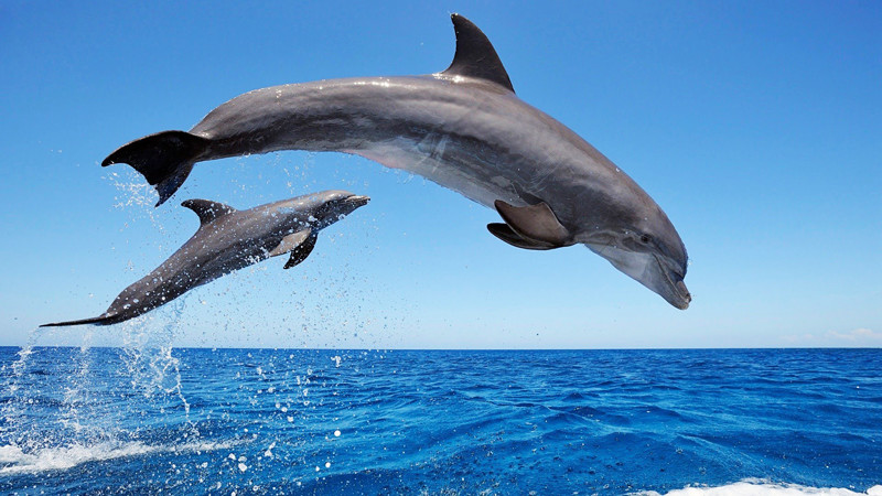 dolphins watching beach boat in Tenerife, Spain
