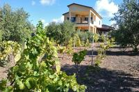 Villa in Italy, Realmonte: View from the vineyard/Olive yard