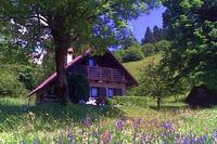 Cottage in Slovenia, Primorska: The chalet in its summer meadow