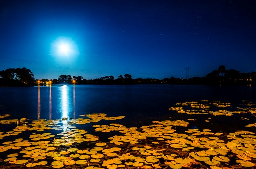 Villa in USA, Robbins Rest: Moonlight at Lake Thomas Villa