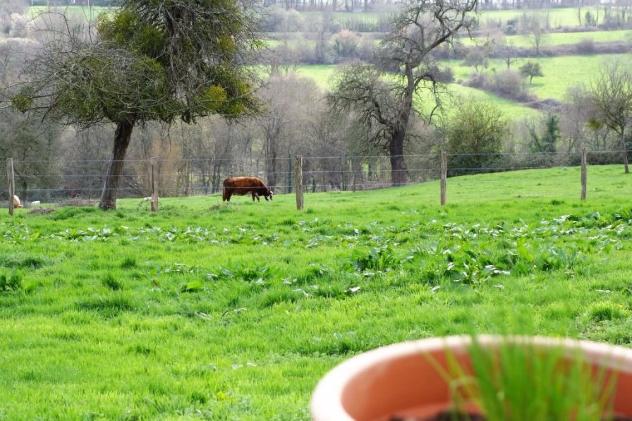 Farm house in France, Hennequeville-Zone Callenville