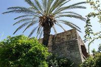 House in Greece, Rhodes Old Town: palmtree
