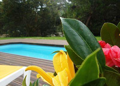 Villa in Portugal, Sintra: Pool ans garden