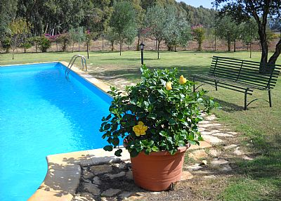Villa in Italy, Pula: swimming pool and flowers