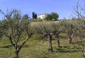 Casa Pietra - The Man Farm House and Casetta