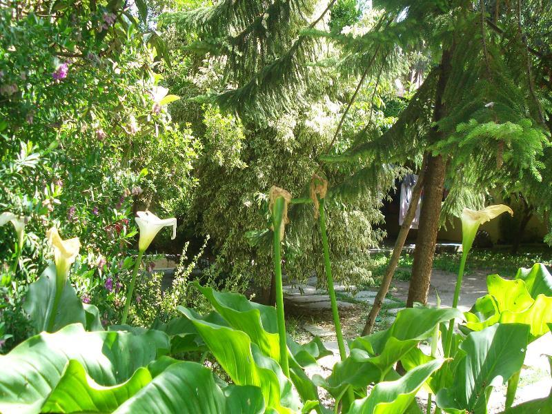 Villa in Greece, Rhodes Old Town: a part of the huge garden